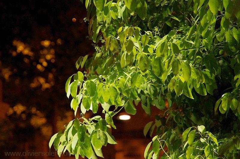 eclairage de vos plantes eclairage v g tation sanary la seyne var 83. Black Bedroom Furniture Sets. Home Design Ideas