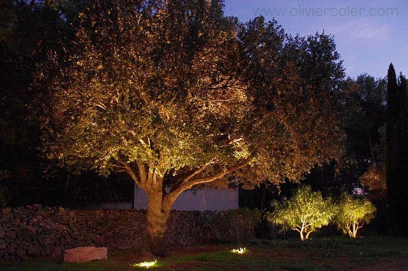 eclairage exterieur vegetation